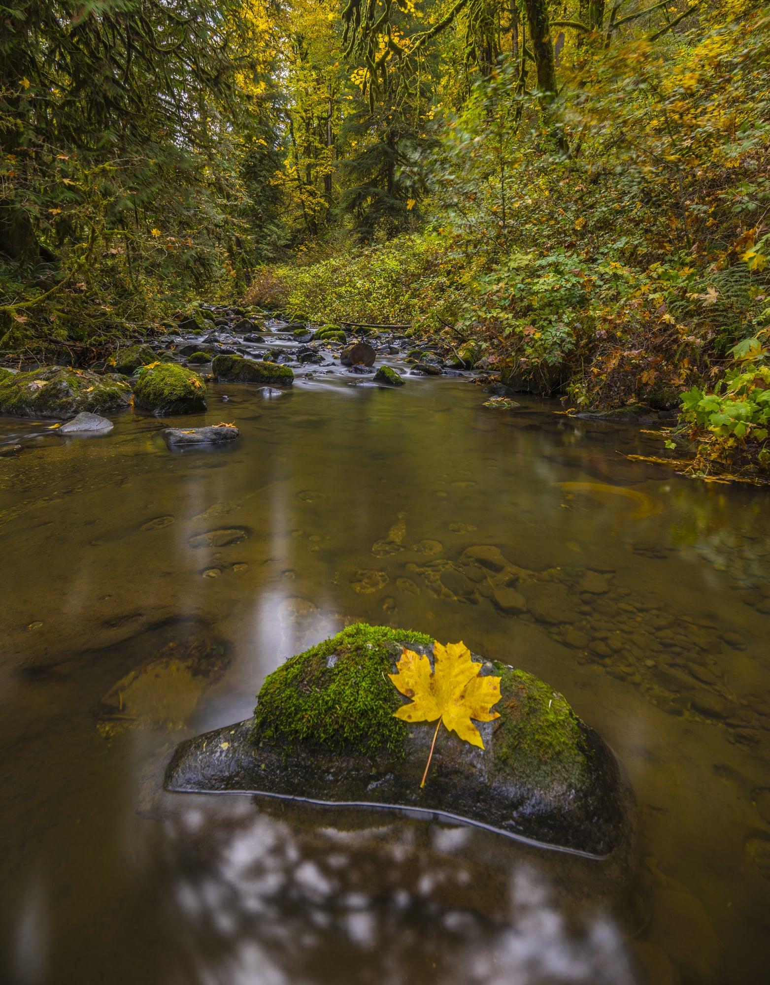 McDowell Creek, Oregon