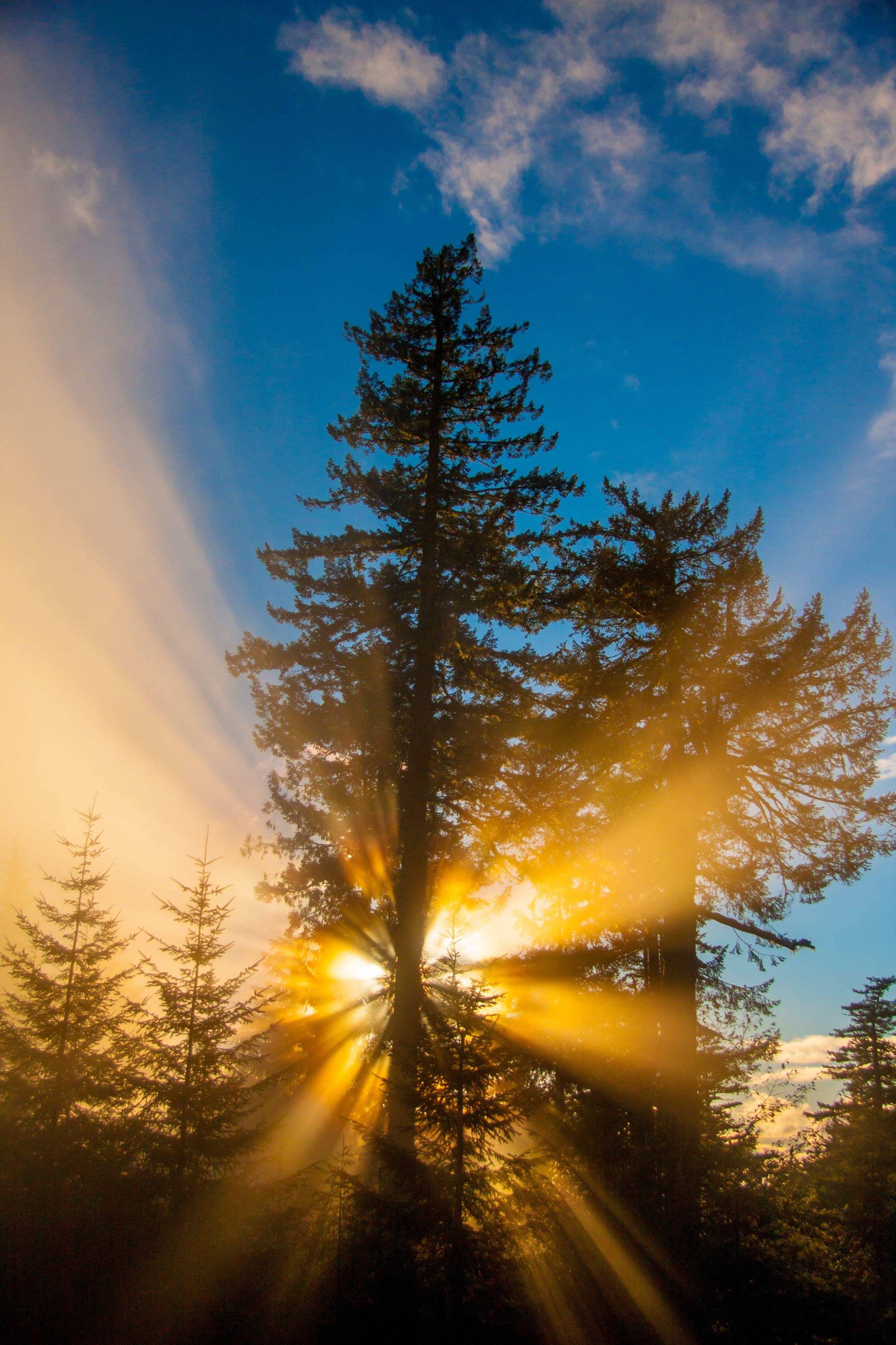 Sunrise at Mary's Peak, Oregon