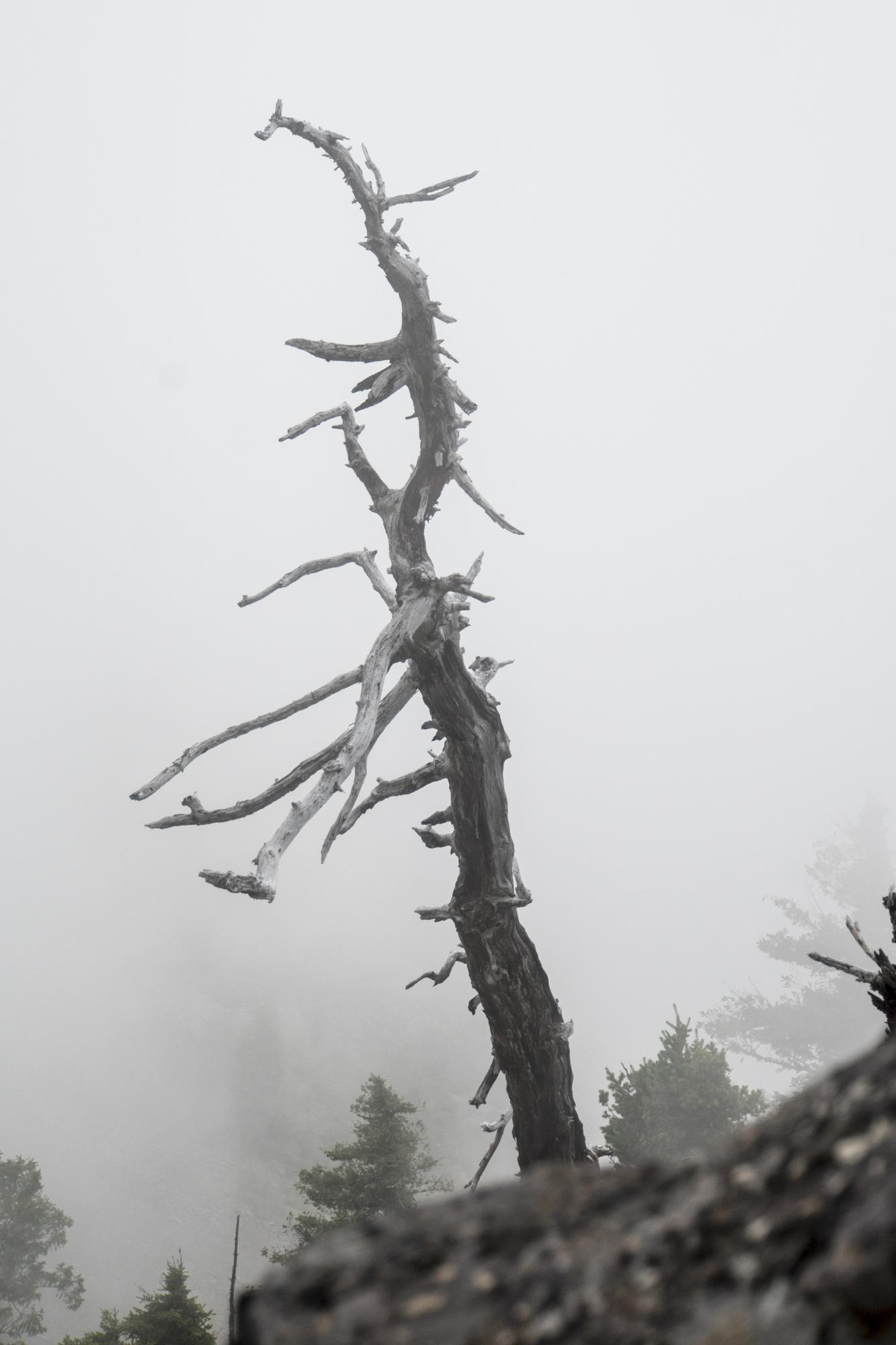 Ghost Tree, Oregon