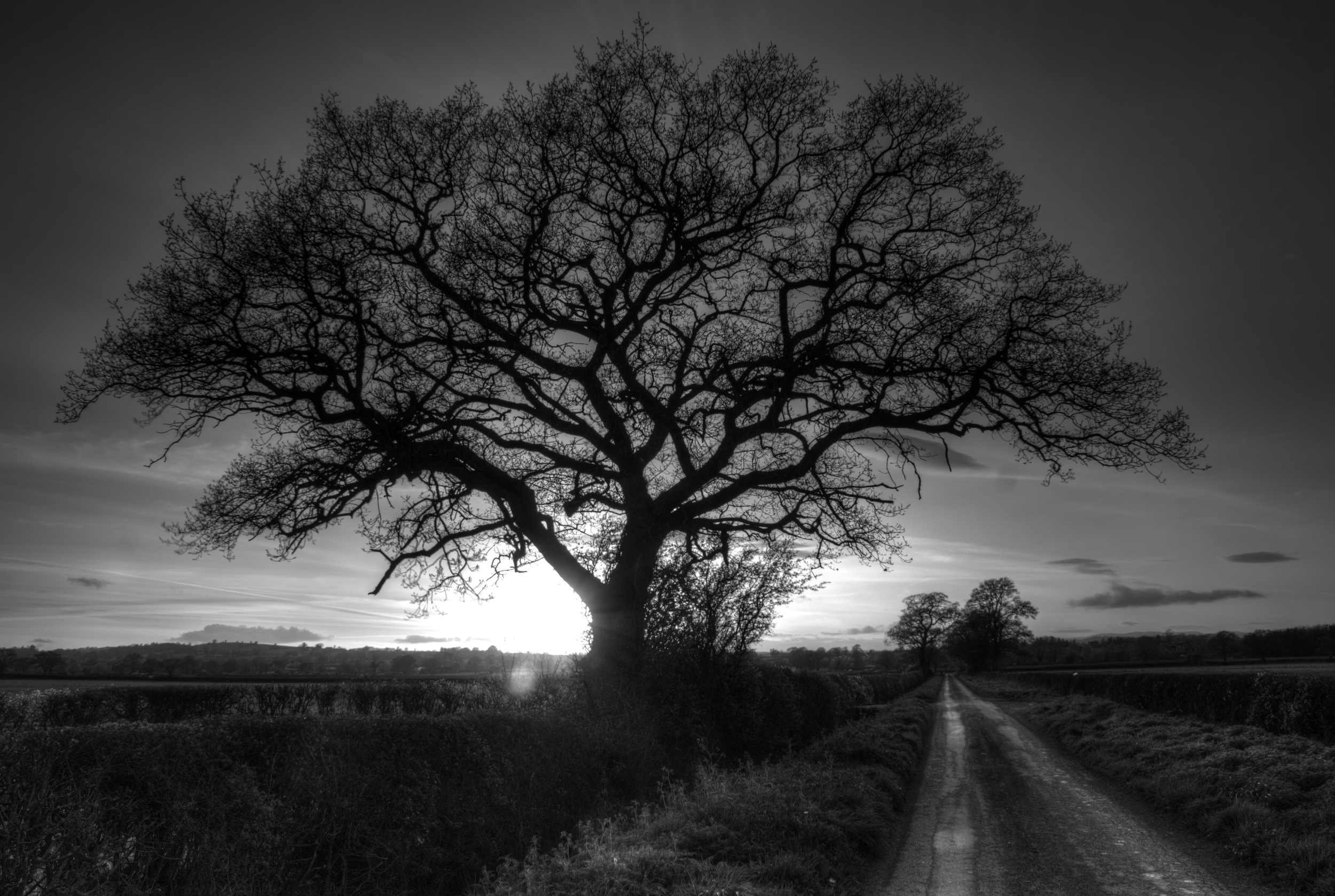 The sun sets behind the lonely old tree