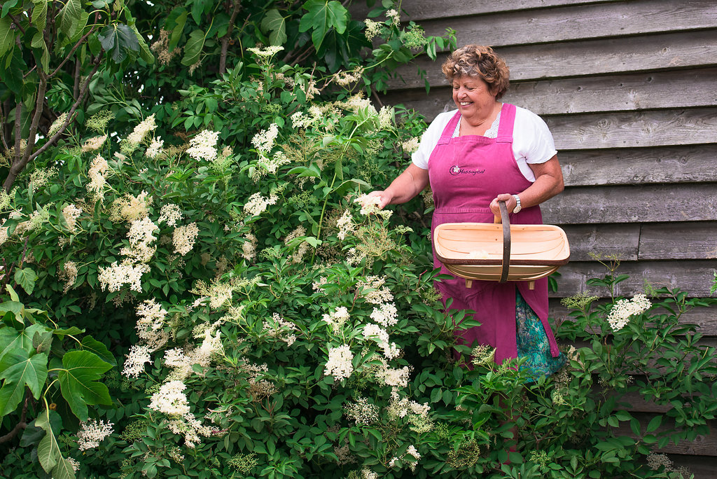 Here I am, carefully perched atop a ladder picking gorgeous elderflowers.