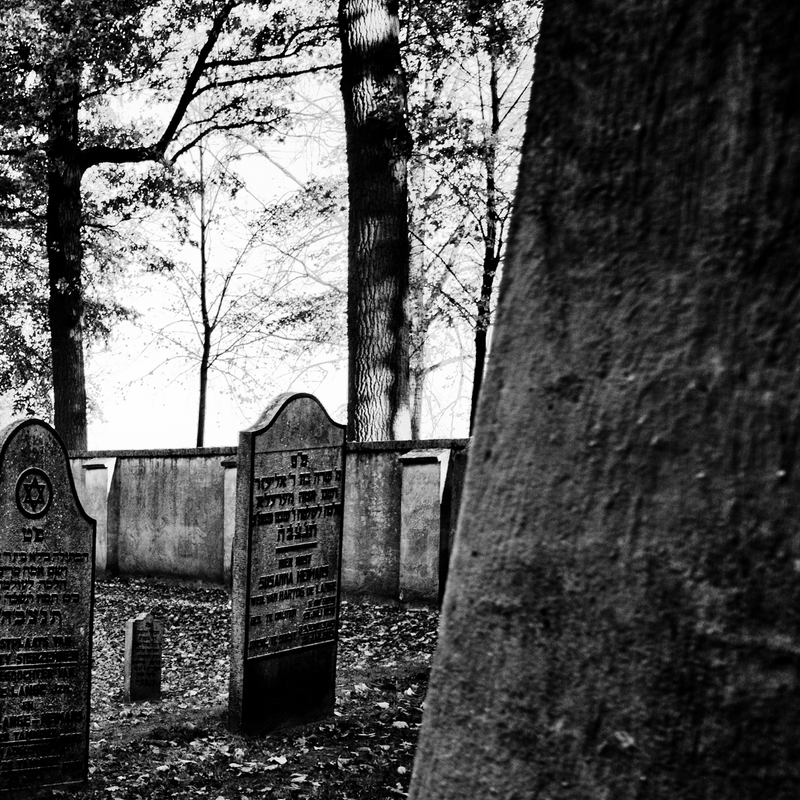 Jewish Cemetery IV.