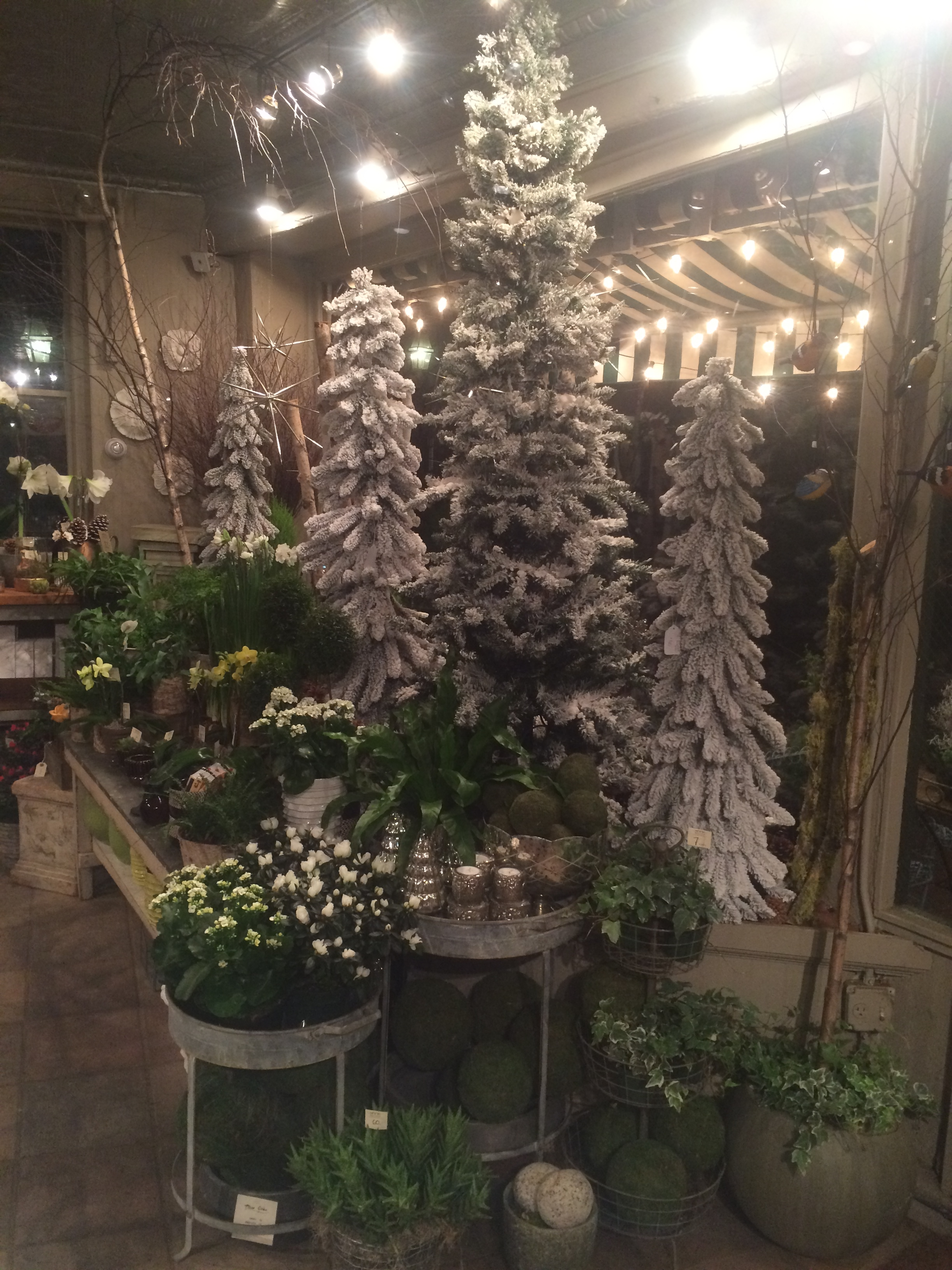 Finally, our stately snowy trees adorn our windows and provide a great backdrop for the green flowering plants and ferns.