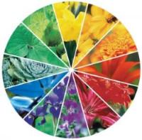 garden wheel.jpg