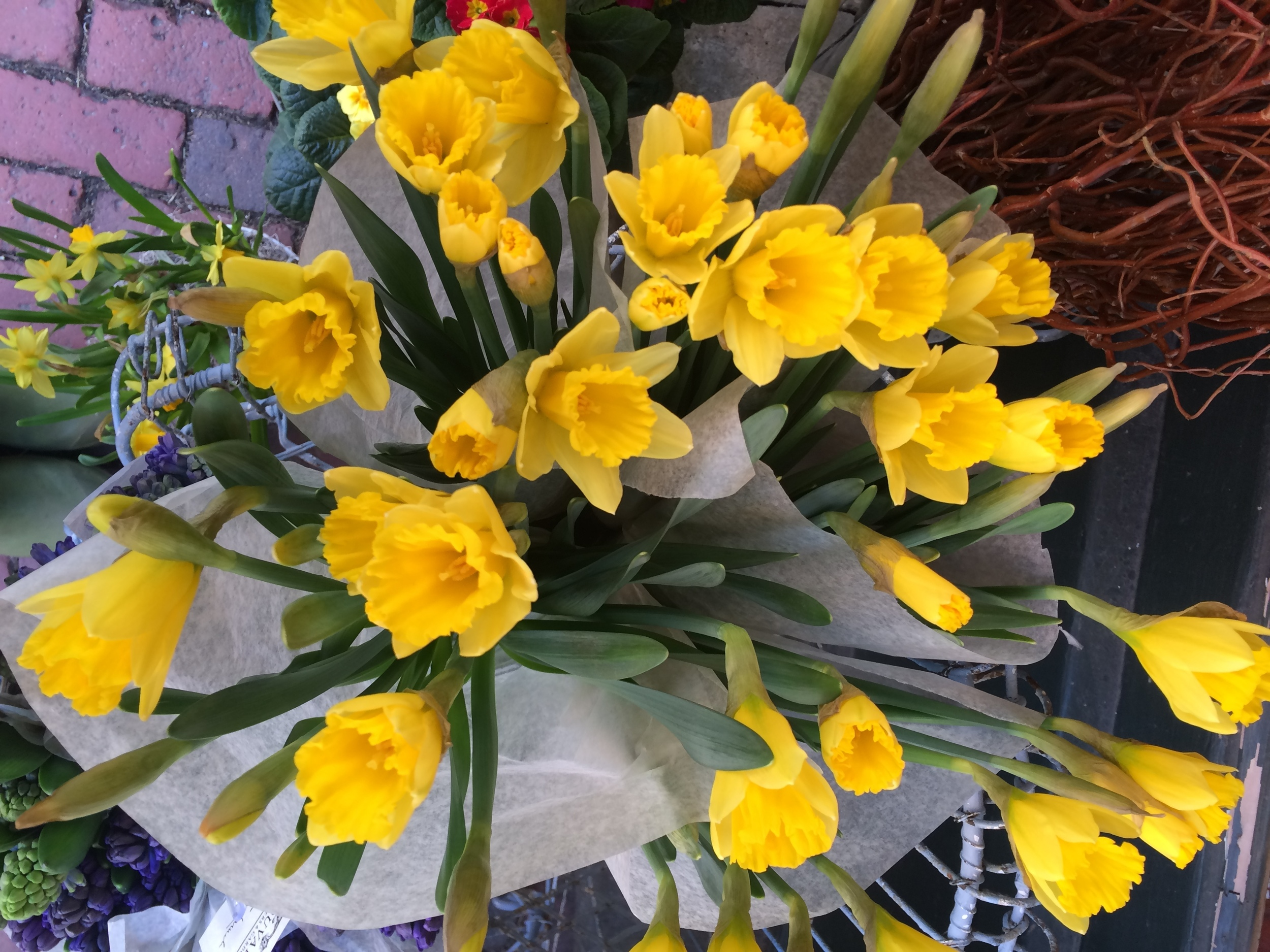 Daffodils bring a bright ray of sunshine into the room.