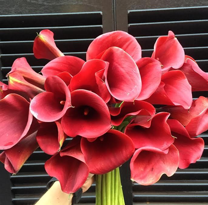 Majestic Calla Lily.jpg