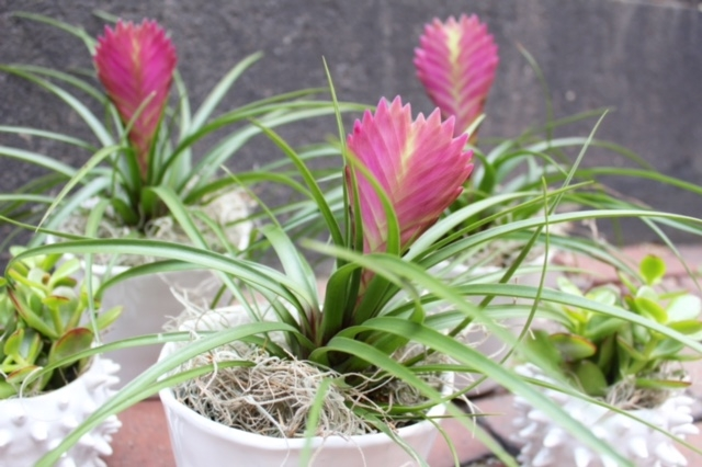 plants boston