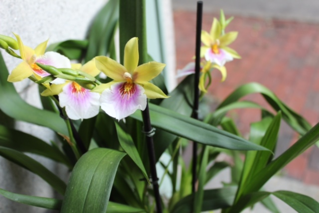 boston orchid delivery