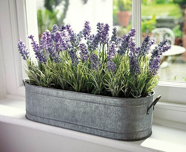 Who doesn't love the scent of lavender? It's also probably the most well-known of all plants when it comes to inducing sleep and reducing anxiety levels. Research backs up these claims, with lavender scents shown to slow down heart rate, lower blood pressure and levels of stress.  In one study, the smell of lavender reduced crying in babies, sending them into a deeper sleep; while simultaneously reducing stress in both mother and child – something all new mothers will be happy to hear!  In women, lavender has been shown to increase light sleep, and decrease rapid-eye movement (REM) sleep and the amount of time to wake after first falling asleep, with opposite effects in men.  While there are a host of lavender scented products on the market to help you get a full night's rest (from scented sleep masks to lavender mattresses) why not go for the most natural and cost effective option – a beautiful lavender plant placed on your nightstand.