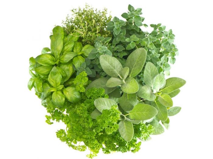 Summer is approaching, herbs are here!