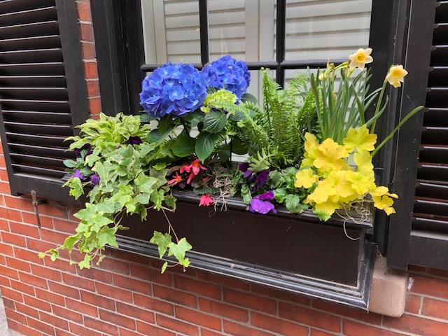 Window Boxes Boston