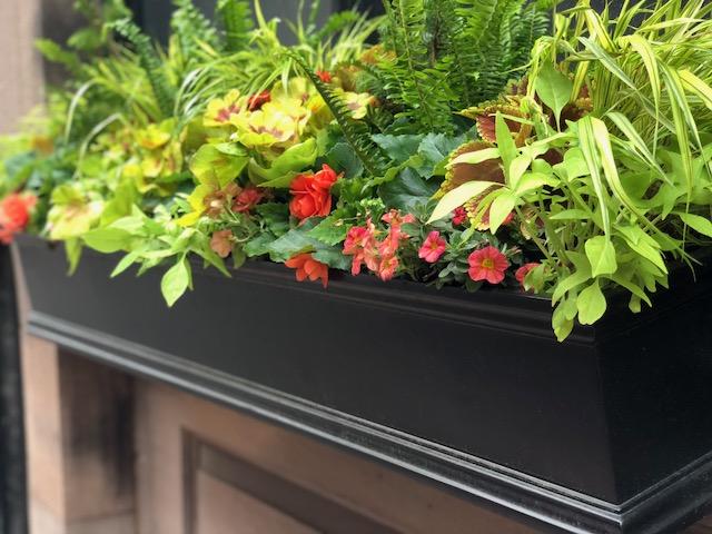 Seasonal Window Boxes Boston