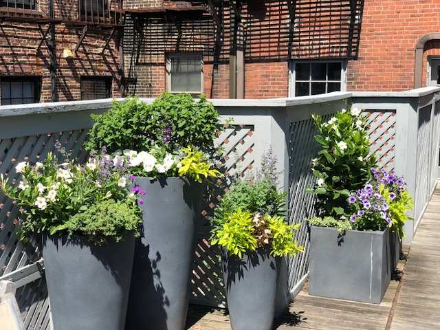 Container Planting Design Boston