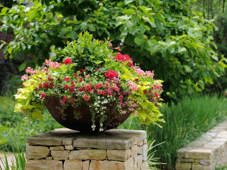 Beautiful flower pot framing house entrance