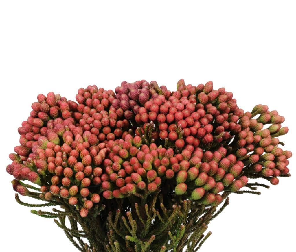brunia 2.jpg