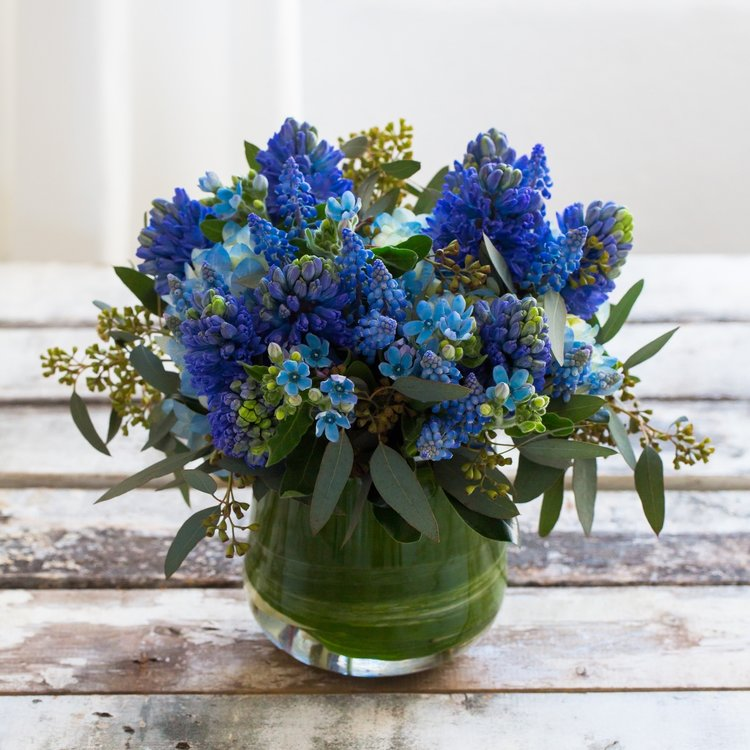 A dreamy collection of soft and fragrant blue hyacinth, muscari, hydrangea and tweedia.
