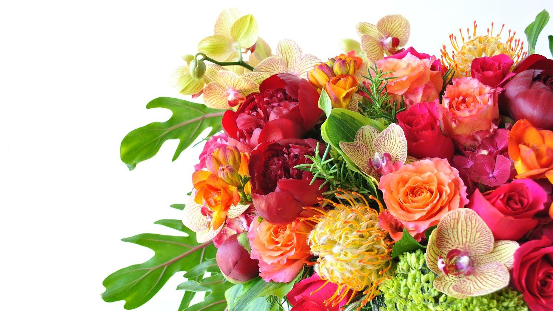 'Aperol Spritz' showcasing stunning Hot Explorer and Free Spirit roses tucked among June flowers.