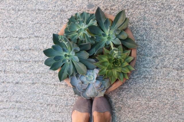 succulent feet.jpg