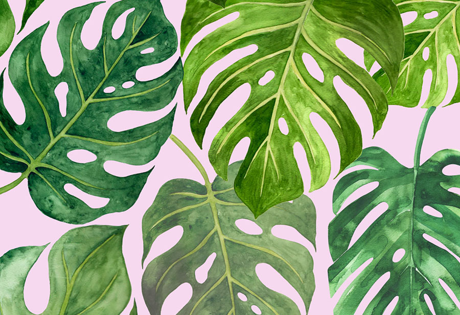 Monstera-deliciosa-_closeup.jpg