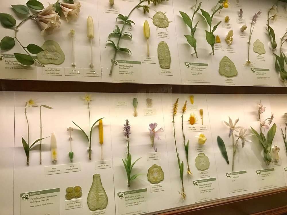 Glass flower exhibit at the Harvard Museum of Natural History