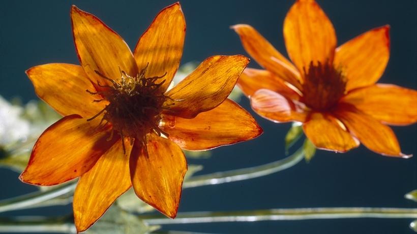 glass flower4.jpg