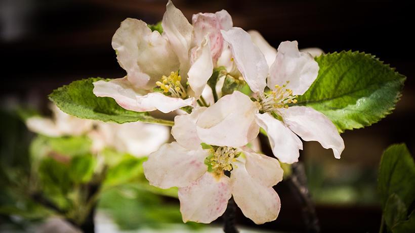 glass flower5.jpg
