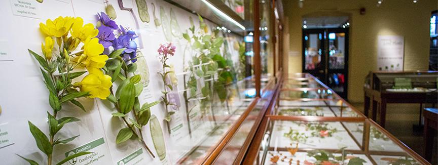 glass flower6.jpg