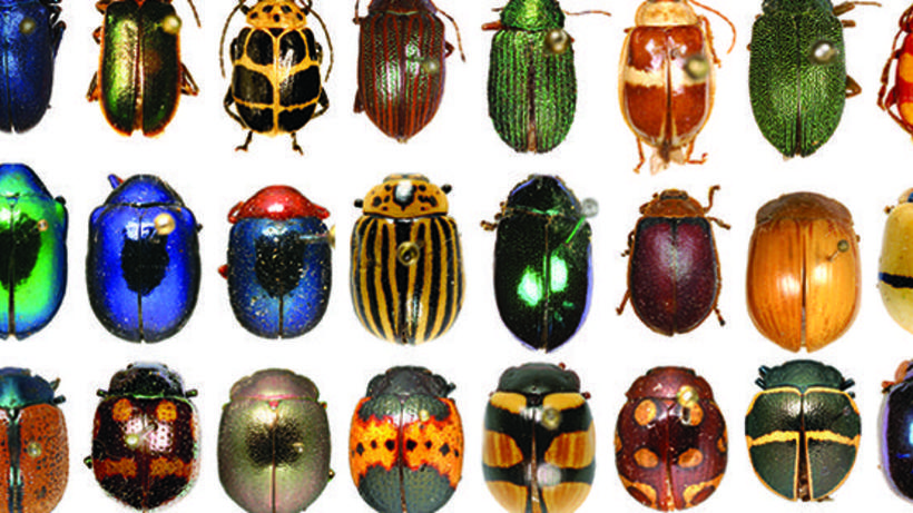 Oh yeah, while you're there, take a look at The Rockefeller Beetles. Let's get weird, bugs are cool.