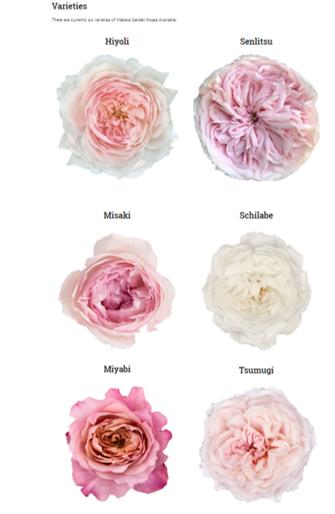 garden roses.png