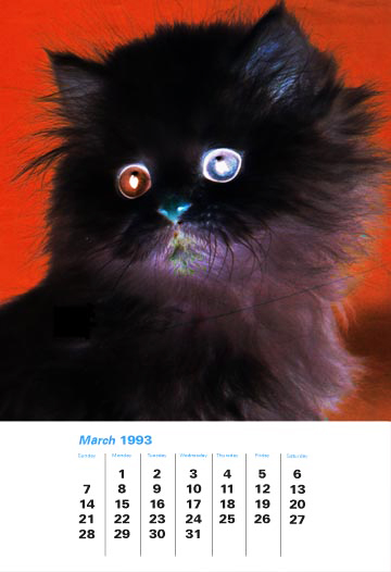 cat_test_print.jpg