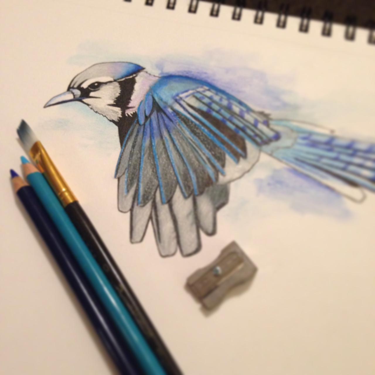 bluebird1.JPG