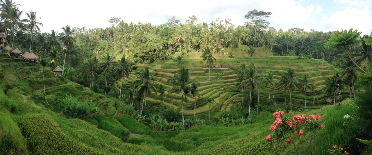 Tegallalang Rice Terrace
