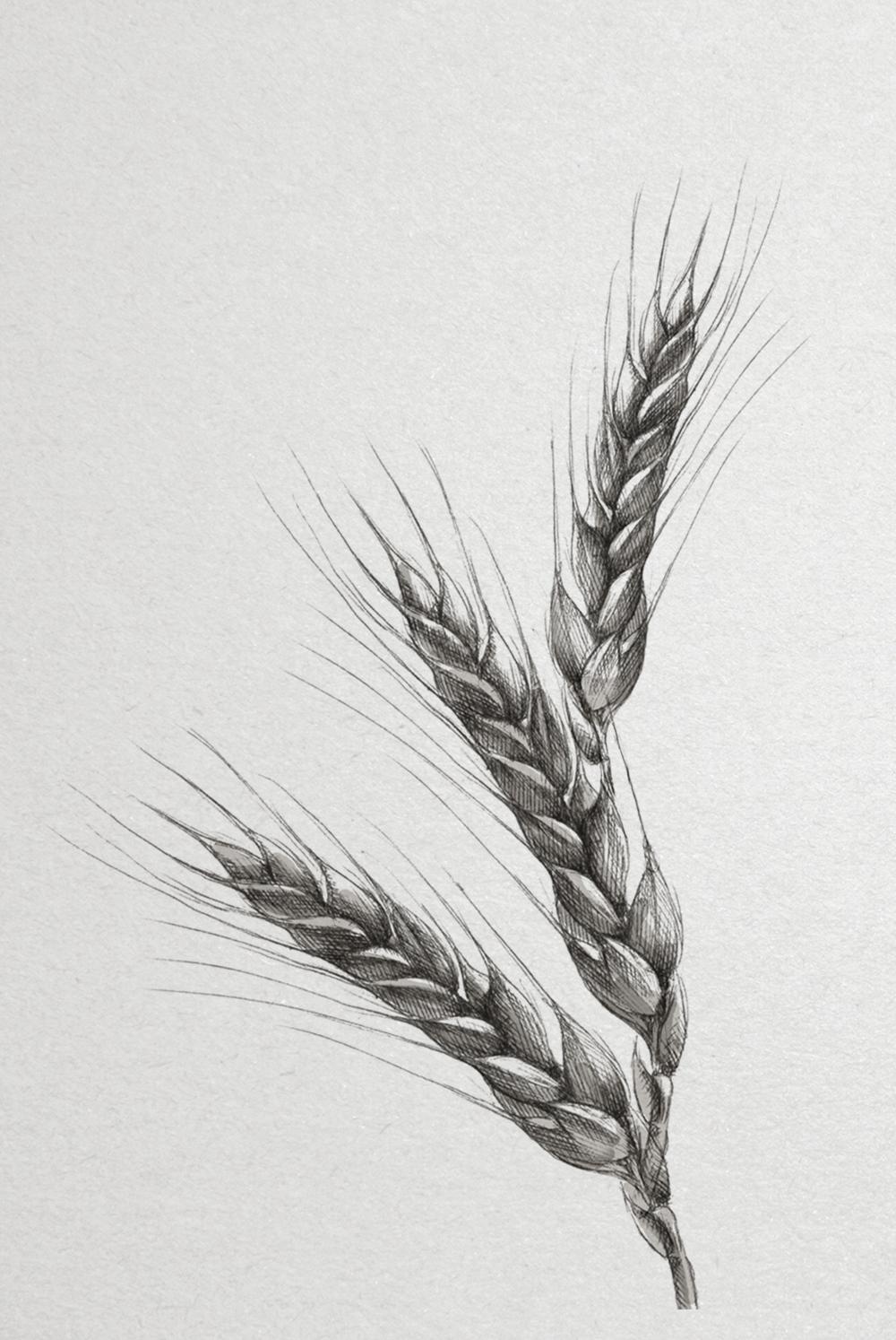 grain_web.jpg