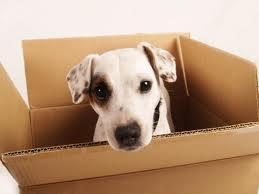 Pets-blog-pic