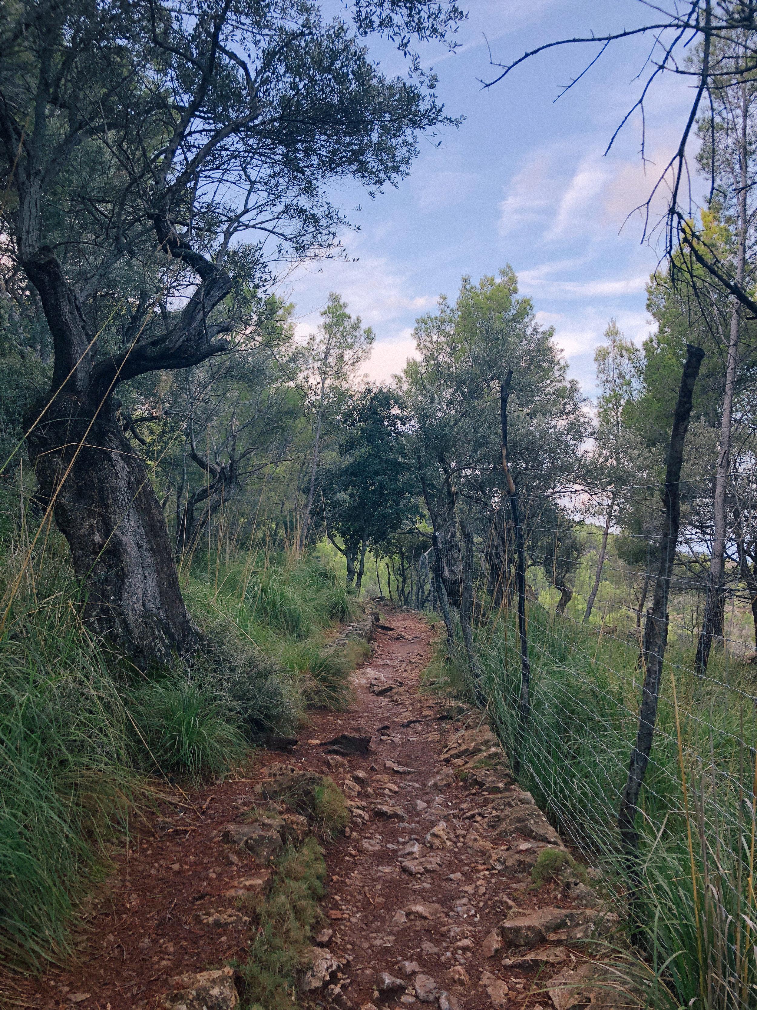 Mallorca*-56.jpg