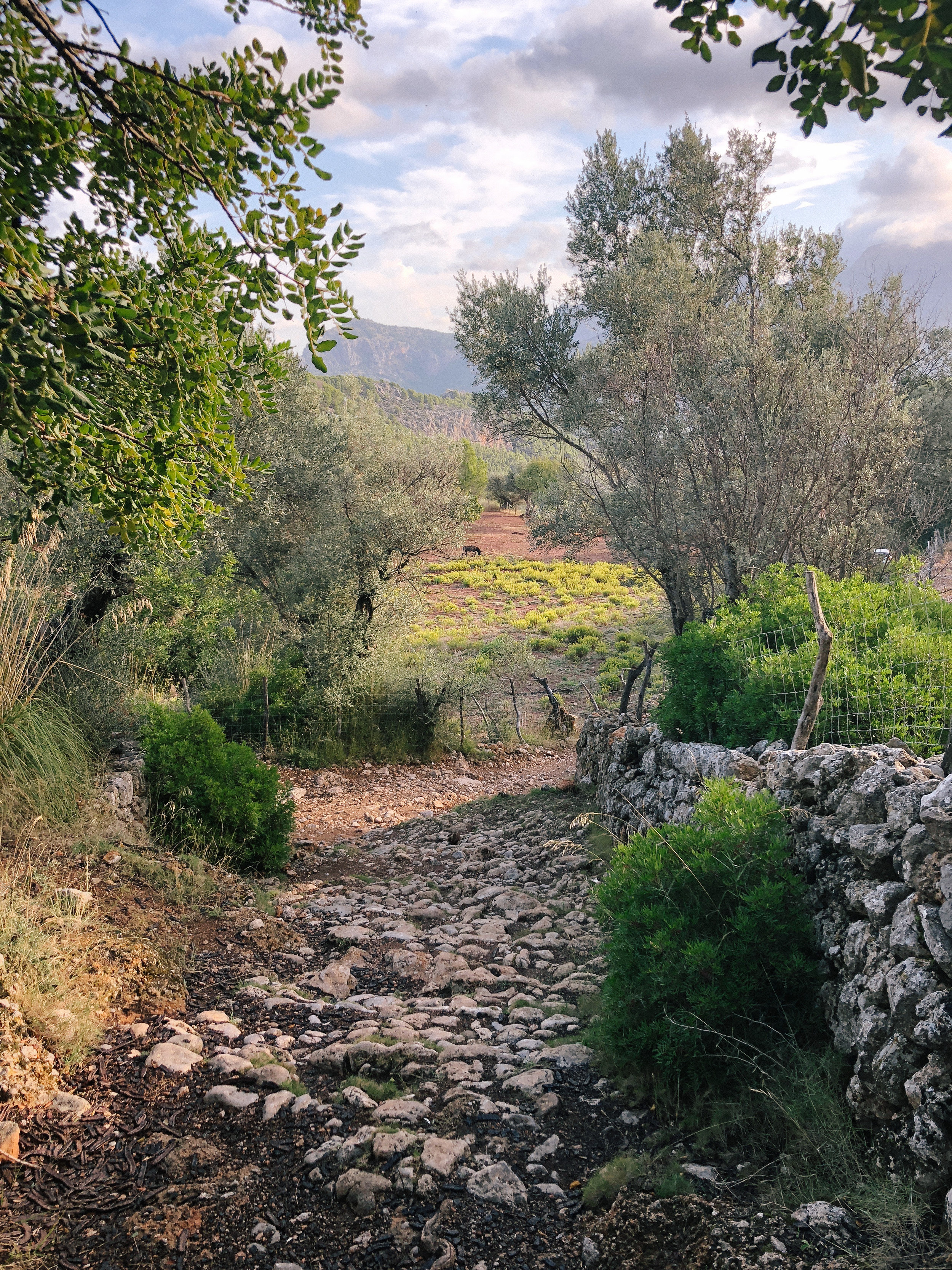 Mallorca*-58.jpg