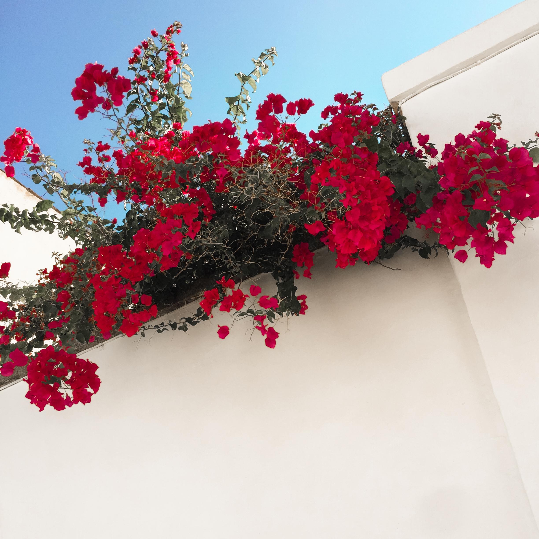 Citudelle Menorca*-22.jpg