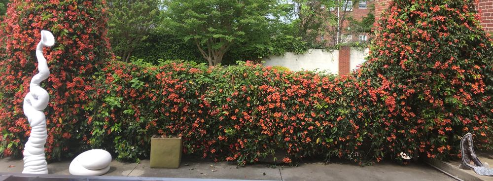 patio_springmc.jpg