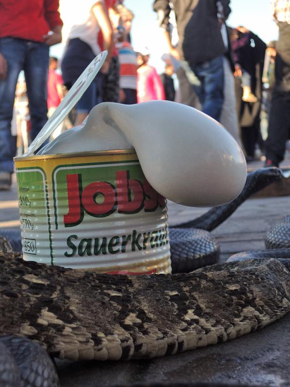 cobra con crauti (2).JPG
