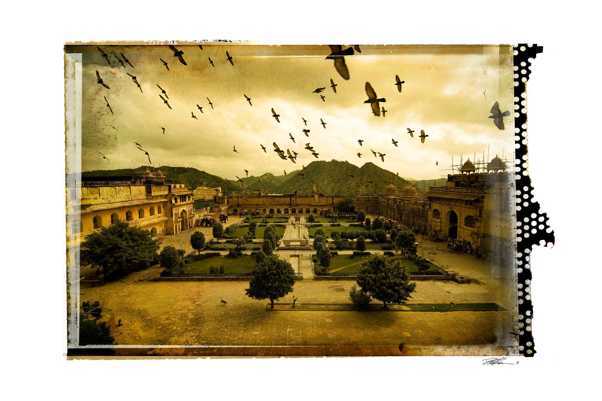 jaipur_birds.jpg
