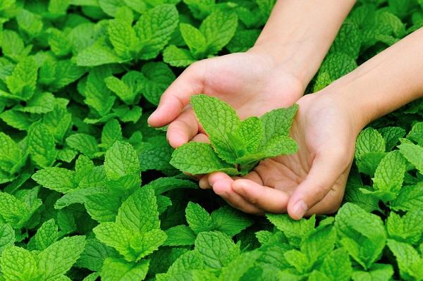 green herbs.jpg
