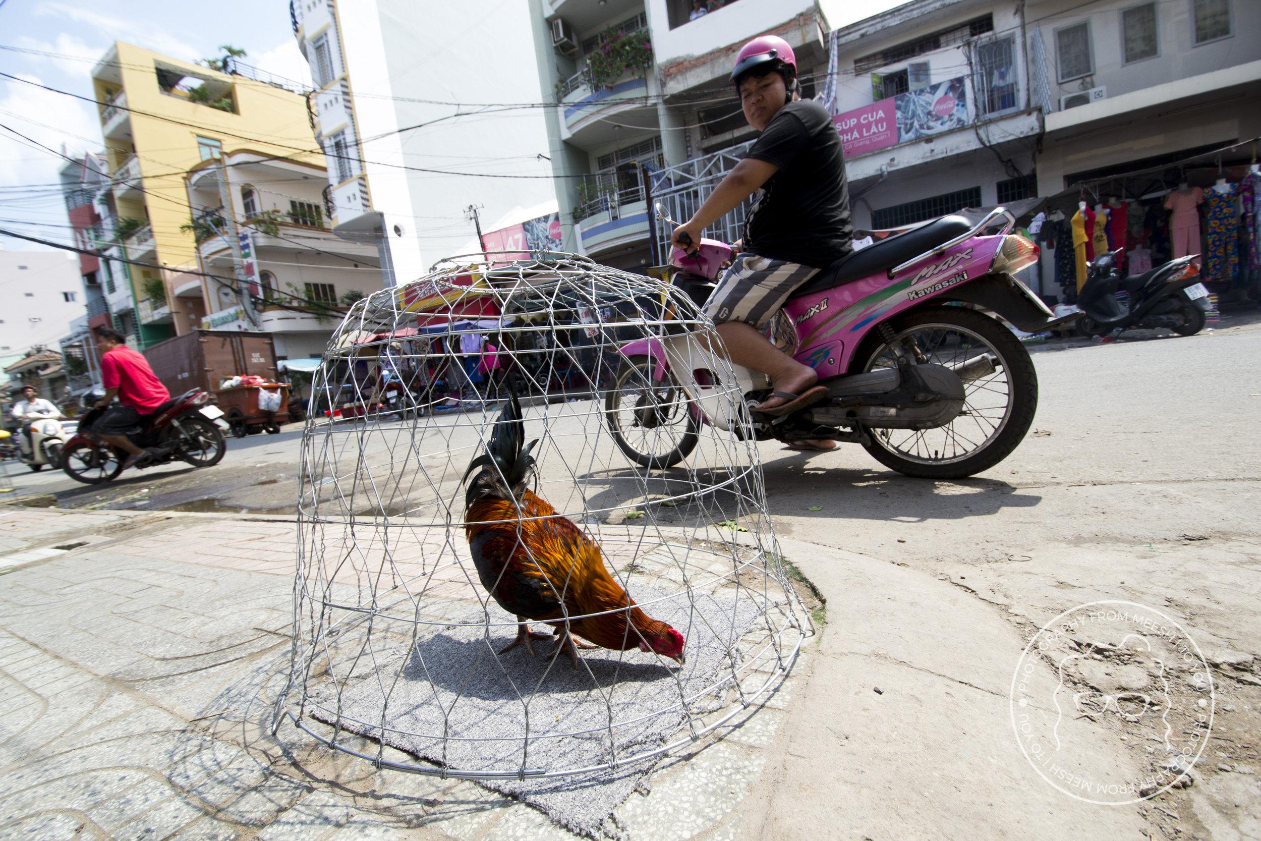 Caged Chicken | Ho Chi Min City, Vietnam | 2017