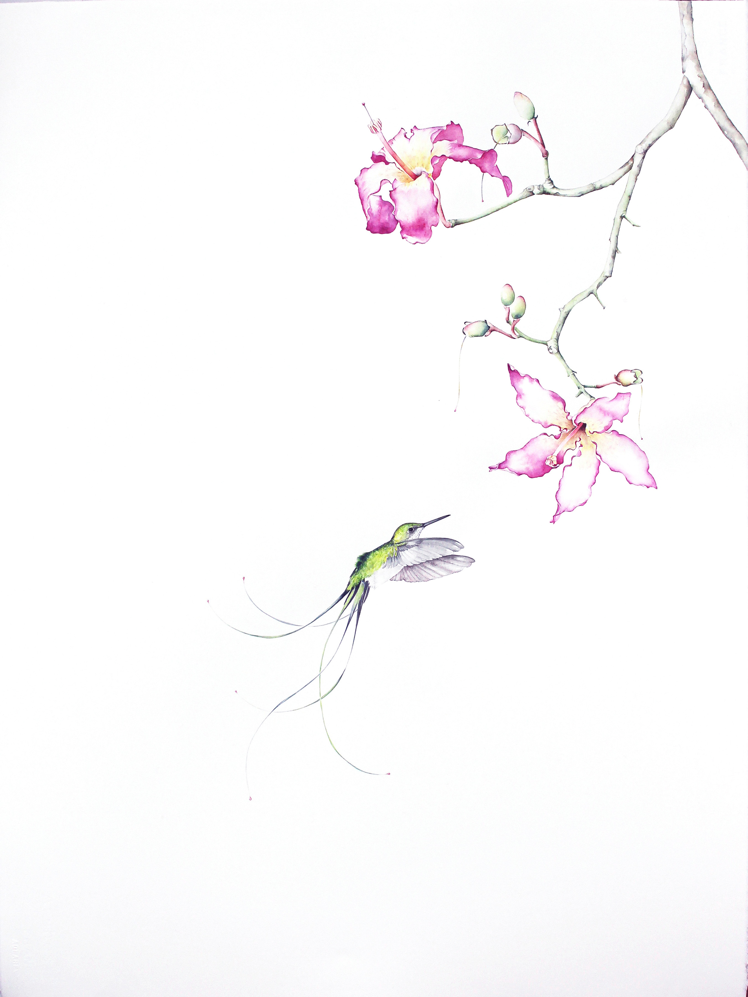 Bird of Paradise #12 , 2016, Watercolor on paper, 34 1/4 × 26 1/2 in (87 × 67.3 cm)