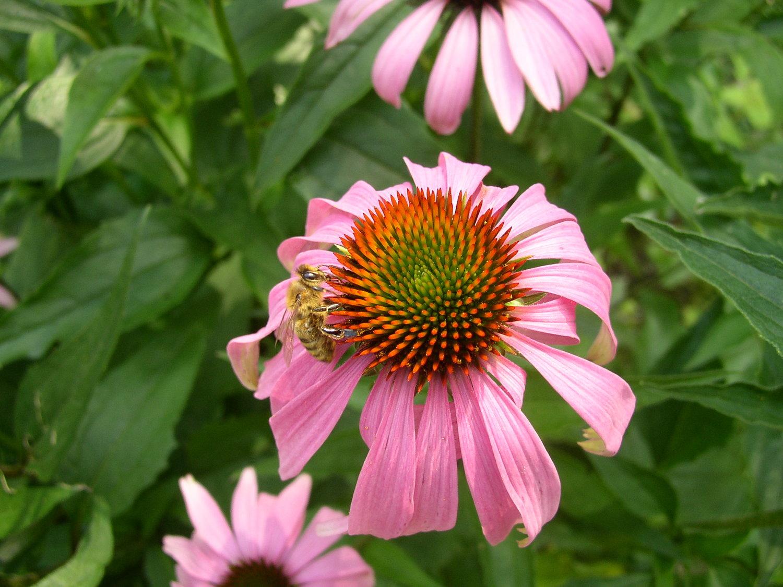Northwoods Apiaries' bee - vermont