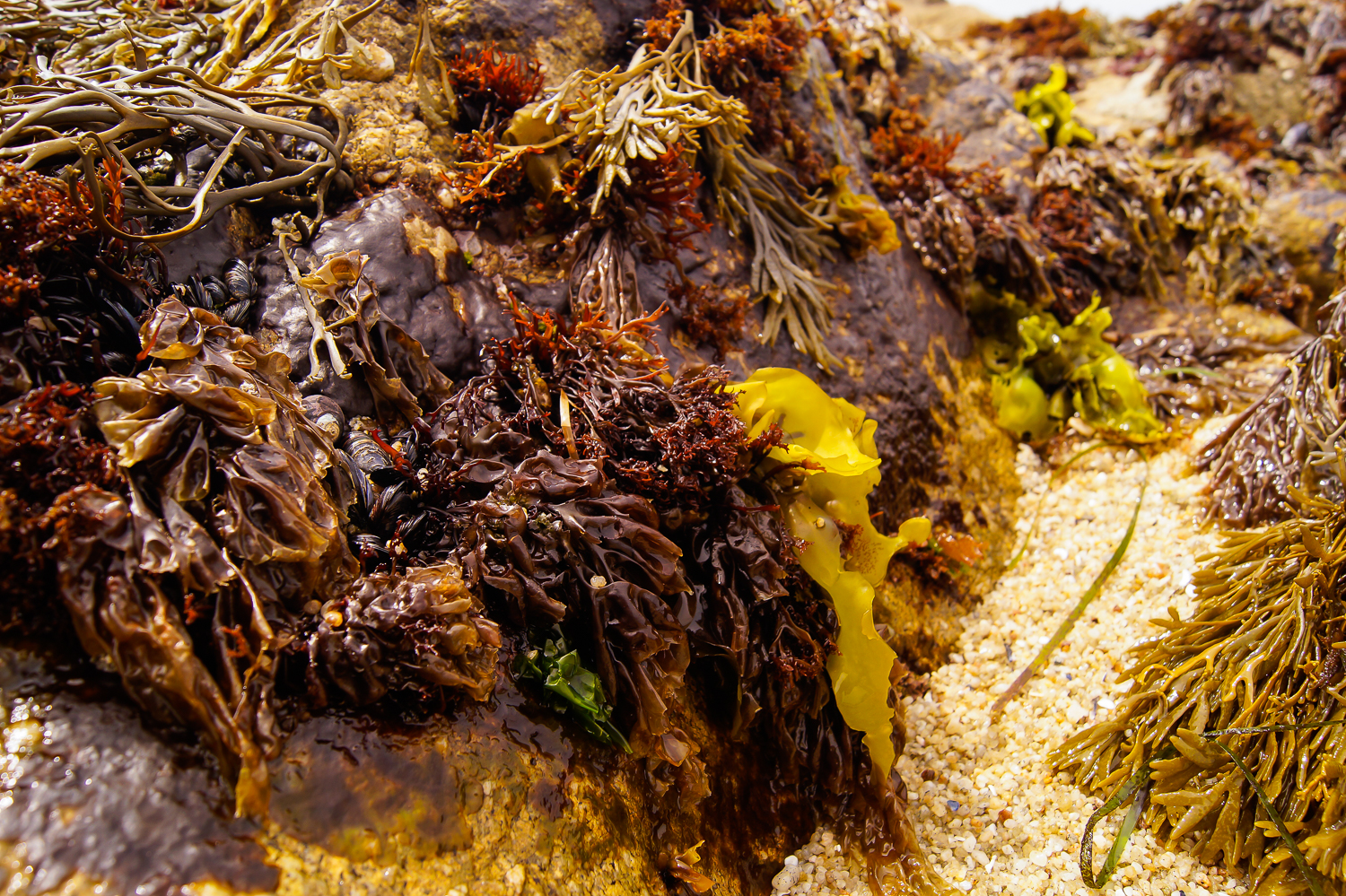 Colorful Seaweed