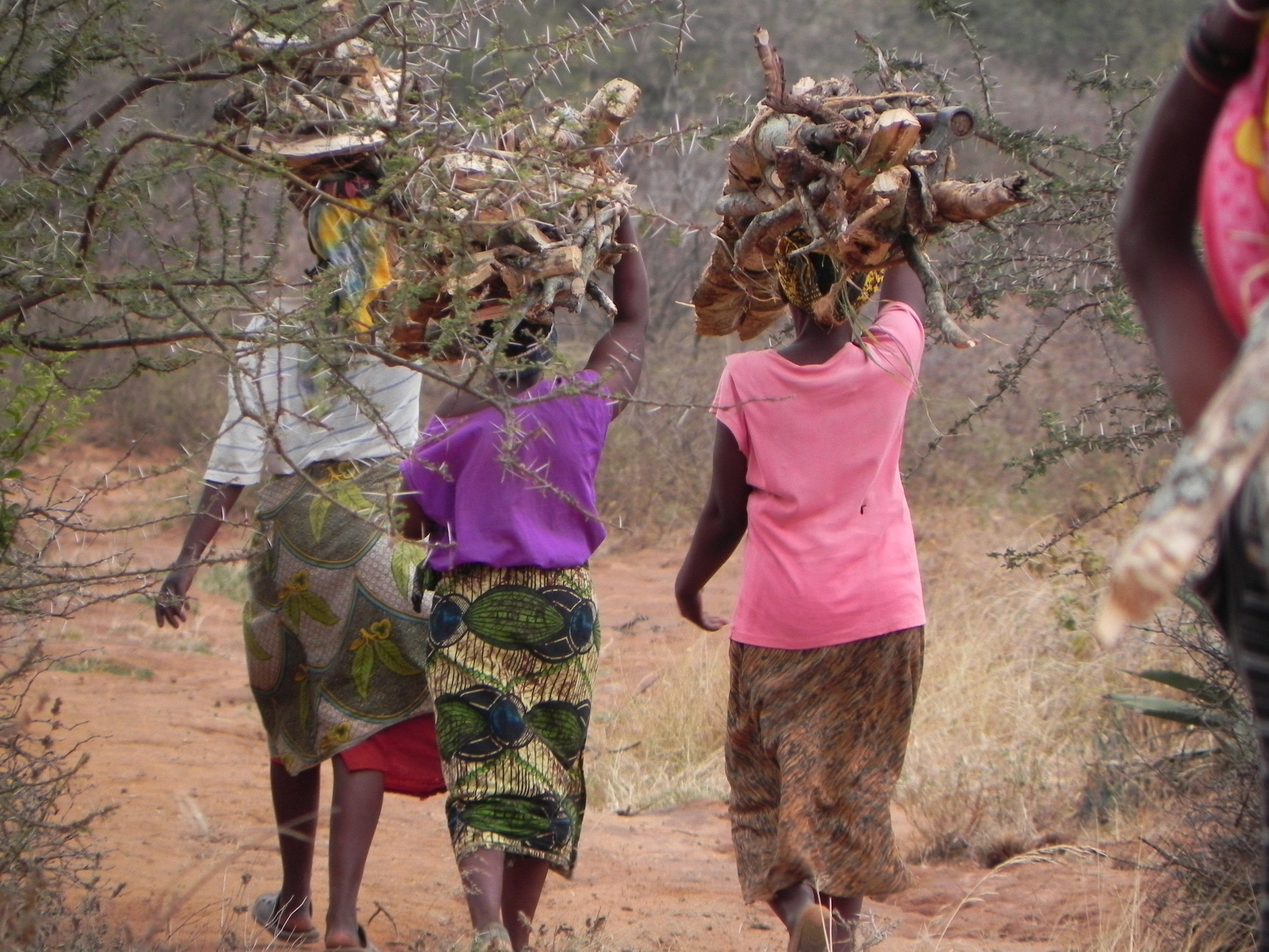 Villagers carry wood harvested from a forest preserve to their homes to make charcoal for cooking fuel - Tanzania