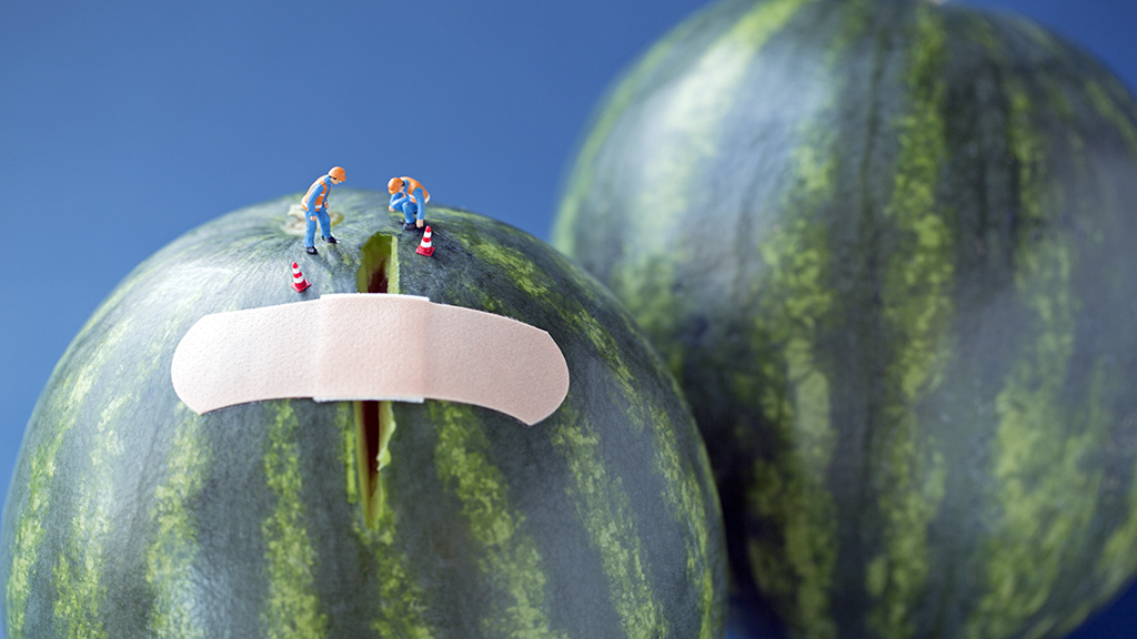 melon+bandaid.jpg