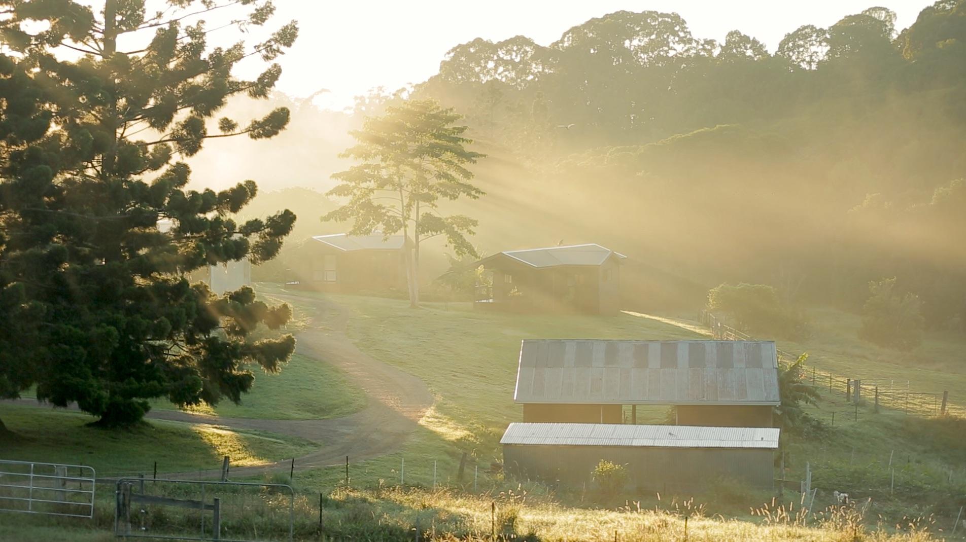 farm early light.jpg