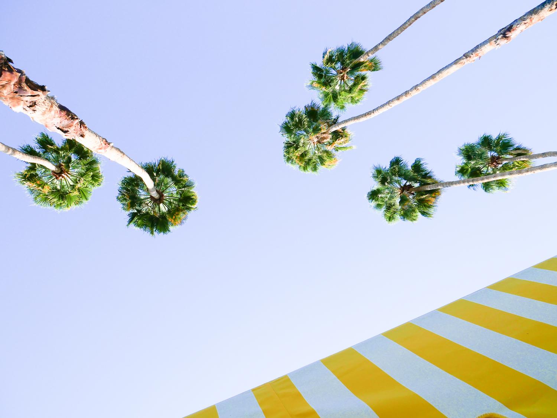 palmsprings (5 of 18).jpg