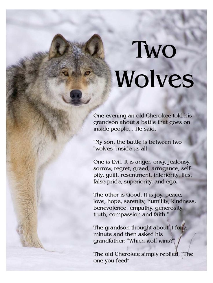 Cherokee Wisdom & Image from Google: goo.gl/LVHT3u